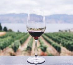 Spanien - rødvin
